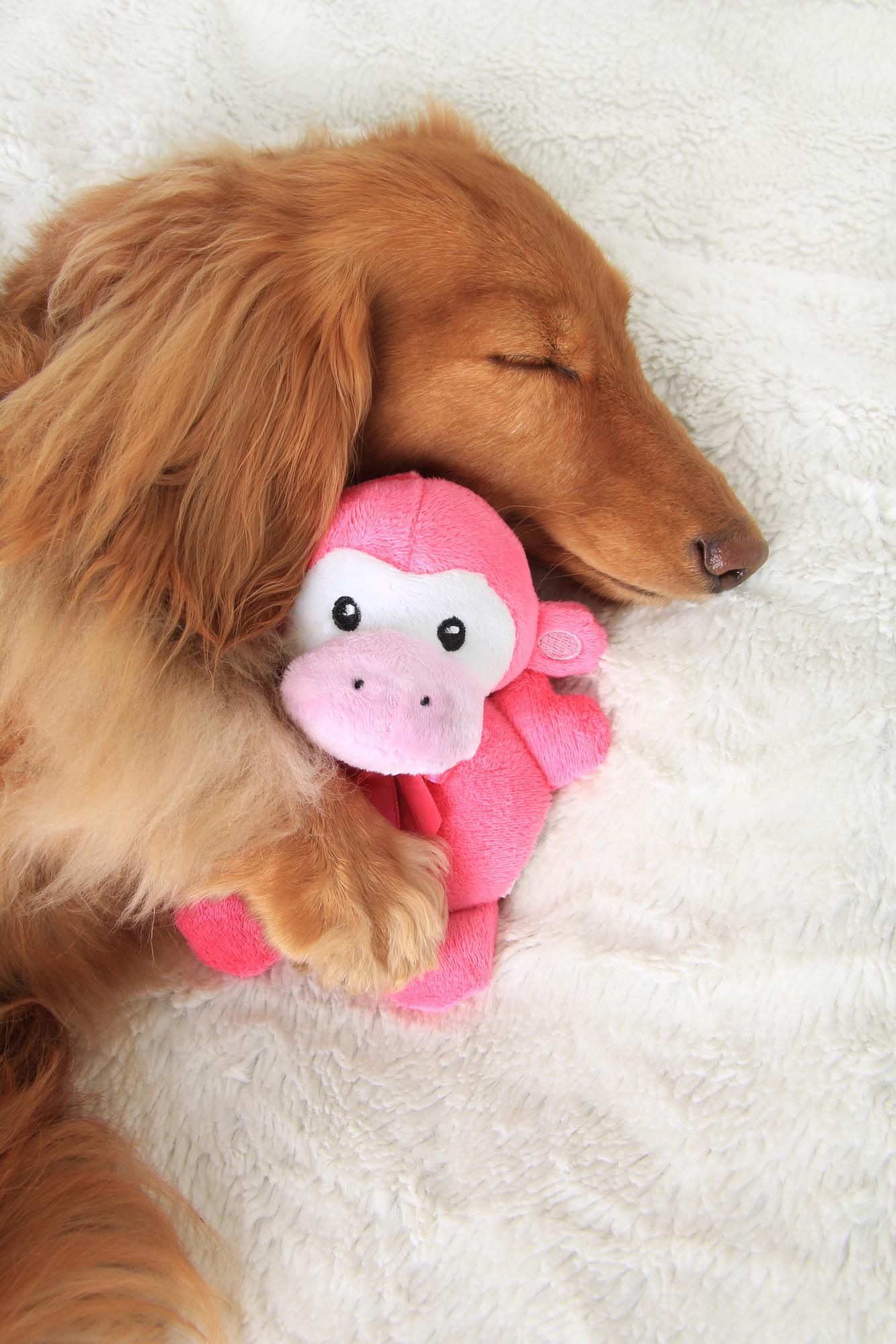 Dog Side Sleep
