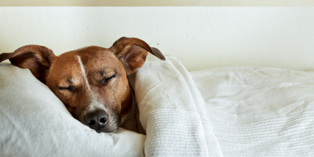 How Much Do Dogs Sleep A Day