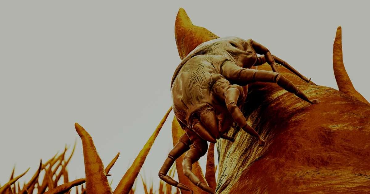 Dust Mites Bites Truth Or Myth Vita Talalay
