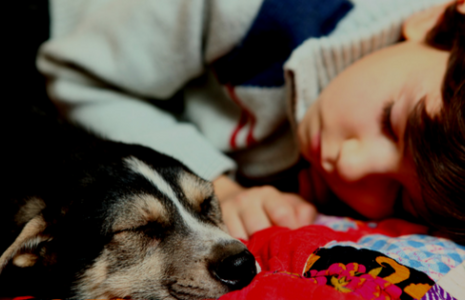 Are Dog Beds Over Benefits Of Sleeping With Your Dog In Bed
